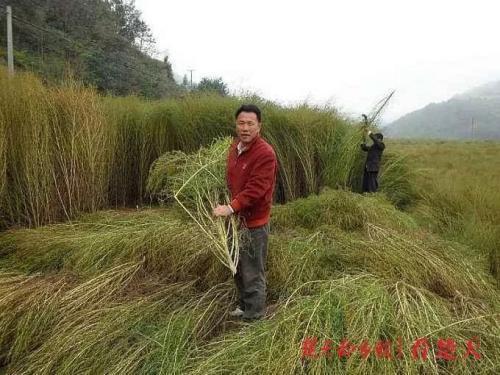 普通人创业的真实故事:种草也可年入4000万